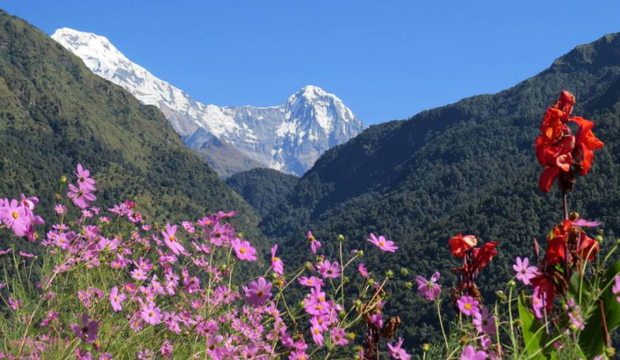 Annapurna South & Himchuili